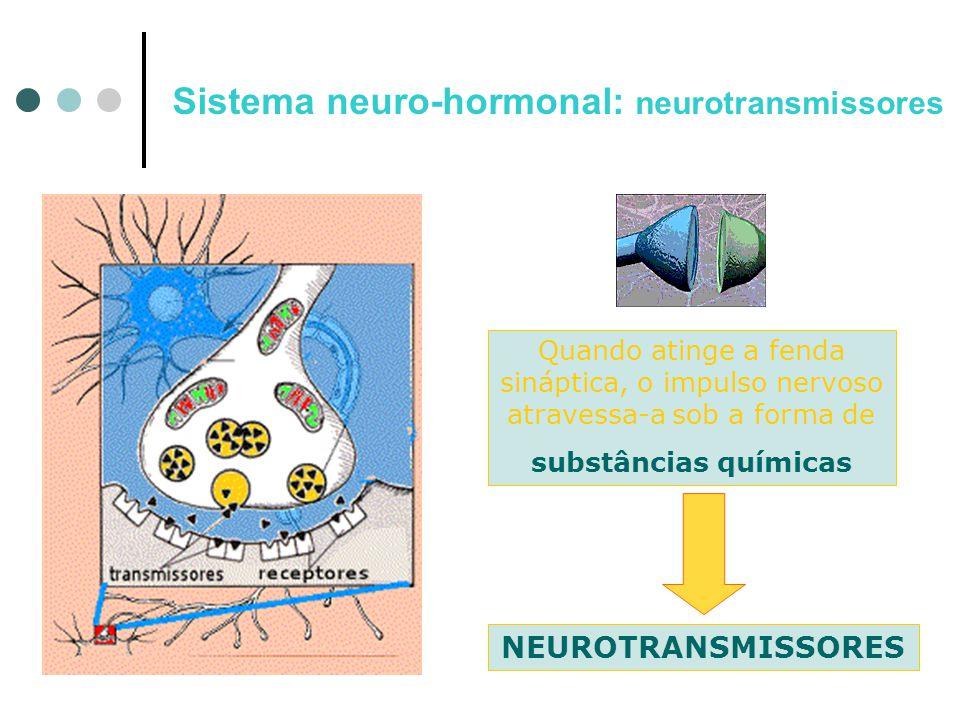 Sistema neuro-hormonal: neurotransmissores Quando atinge a fenda sináptica, o impulso nervoso atravessa-a sob a forma de substâncias químicas NEUROTRA