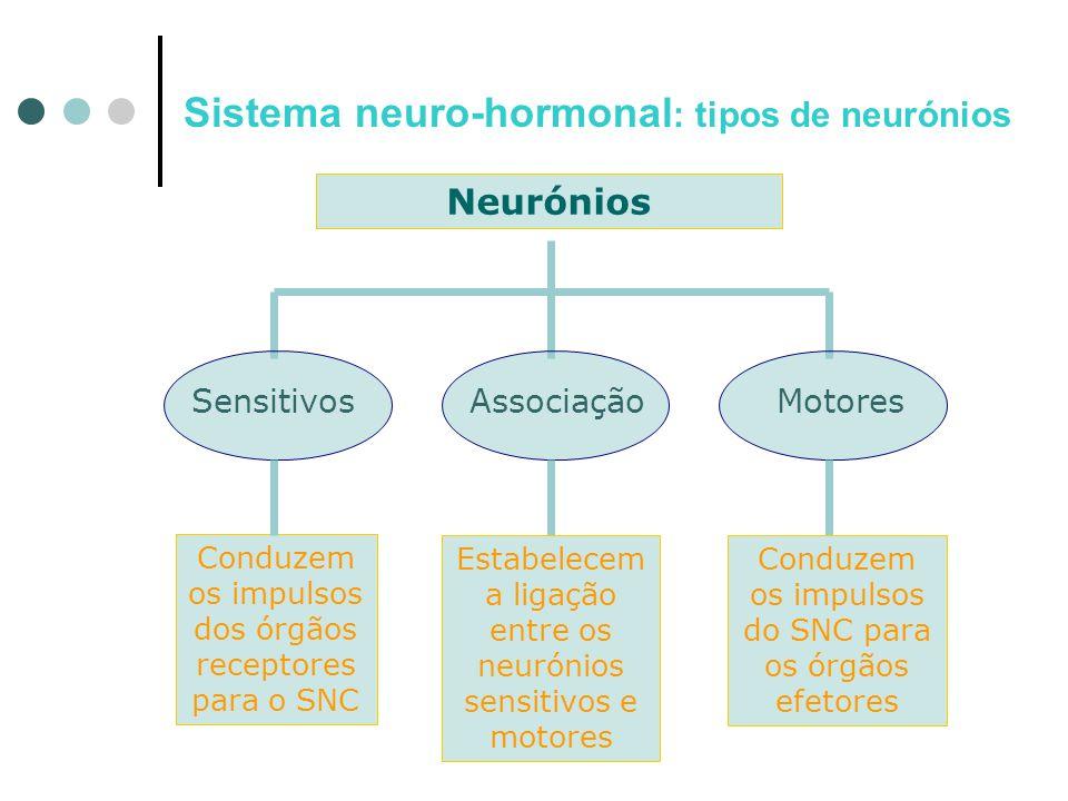 Neurónios SensitivosAssociaçãoMotores Conduzem os impulsos dos órgãos receptores para o SNC Estabelecem a ligação entre os neurónios sensitivos e moto