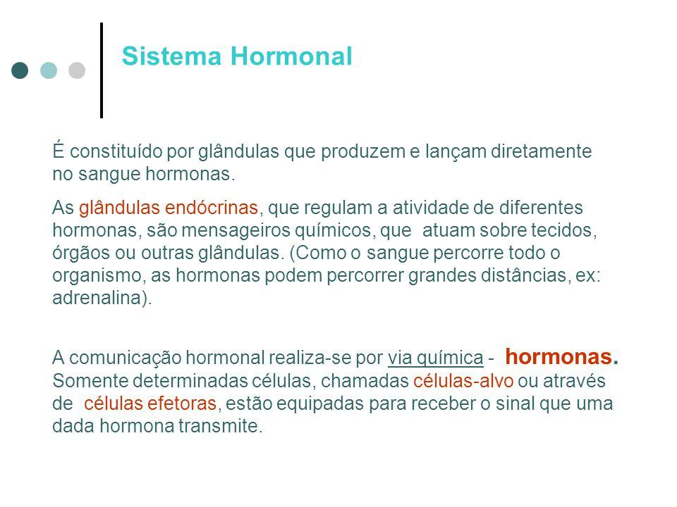 Sistema Hormonal É constituído por glândulas que produzem e lançam diretamente no sangue hormonas. As glândulas endócrinas, que regulam a atividade de