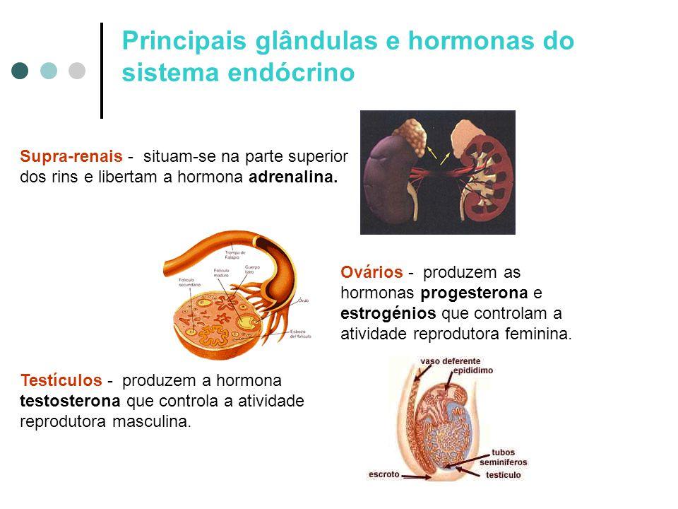 Supra-renais - situam-se na parte superior dos rins e libertam a hormona adrenalina. Testículos - produzem a hormona testosterona que controla a ativi