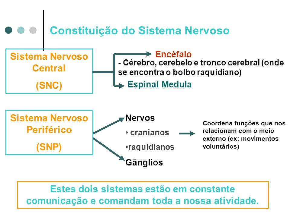 Constituição do Sistema Nervoso Sistema Nervoso Central (SNC) Encéfalo Espinal Medula Nervos • cranianos •raquidianos Gânglios - Cérebro, cerebelo e t