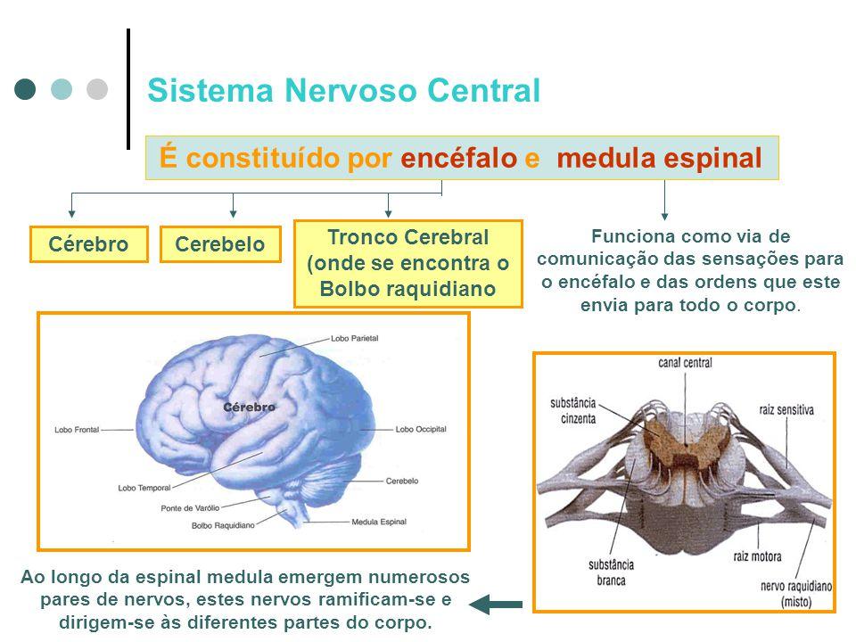 CérebroCerebelo Tronco Cerebral (onde se encontra o Bolbo raquidiano Funciona como via de comunicação das sensações para o encéfalo e das ordens que e