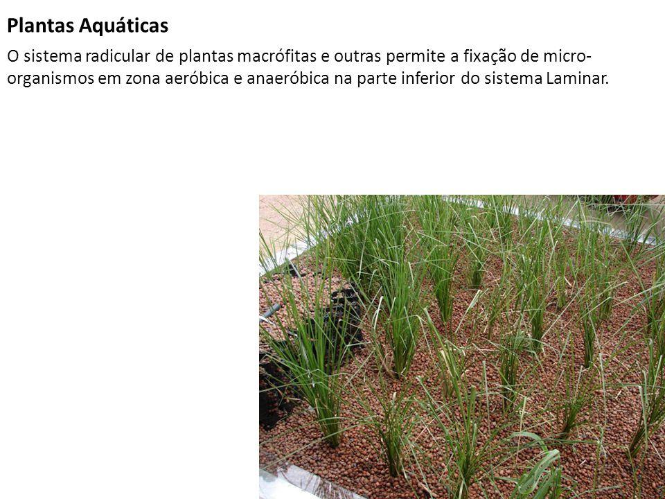 Plantas Aquáticas O sistema radicular de plantas macrófitas e outras permite a fixação de micro- organismos em zona aeróbica e anaeróbica na parte inf