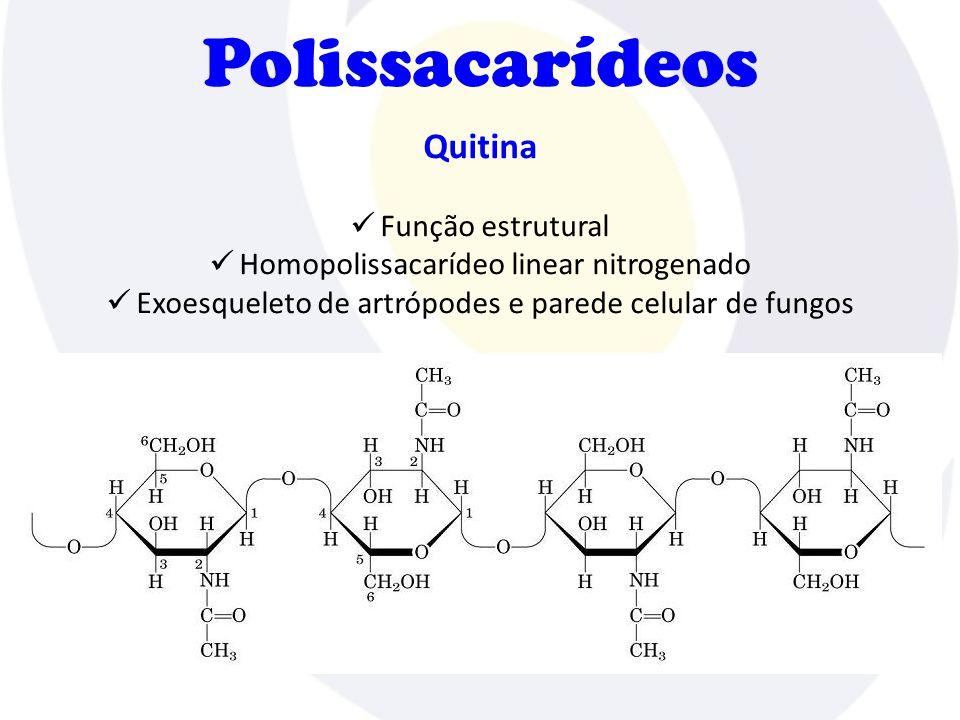 Polissacarídeos Quitina  Função estrutural  Homopolissacarídeo linear nitrogenado  Exoesqueleto de artrópodes e parede celular de fungos