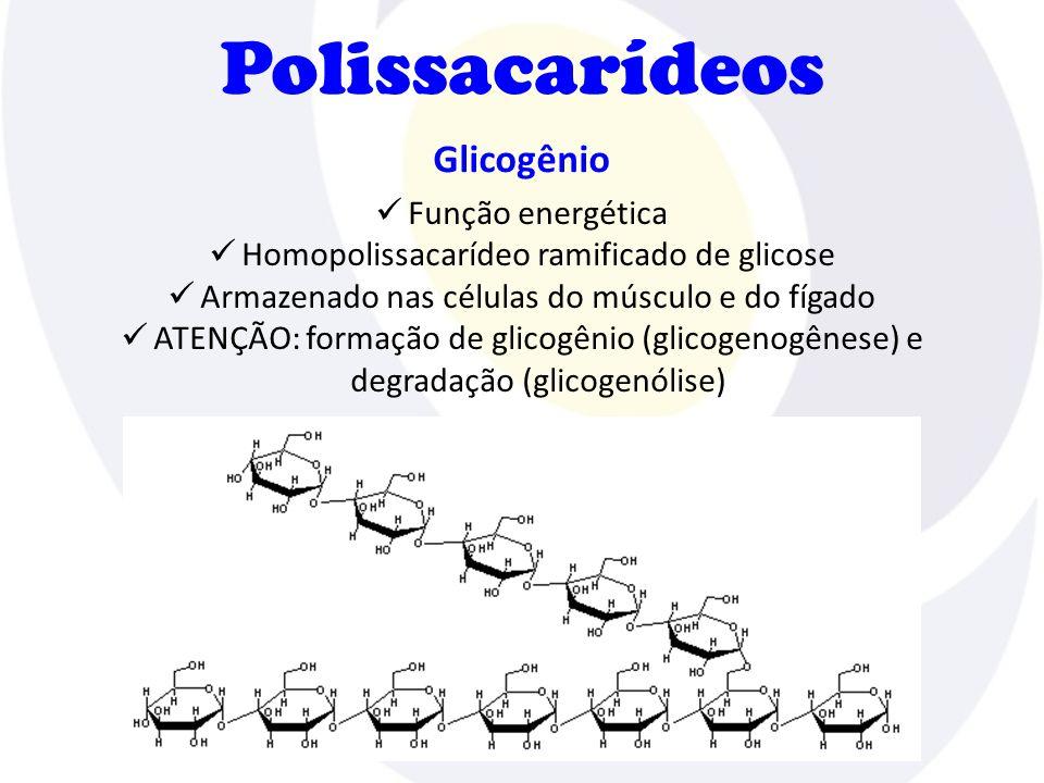 Polissacarídeos Glicogênio  Função energética  Homopolissacarídeo ramificado de glicose  Armazenado nas células do músculo e do fígado  ATENÇÃO: f