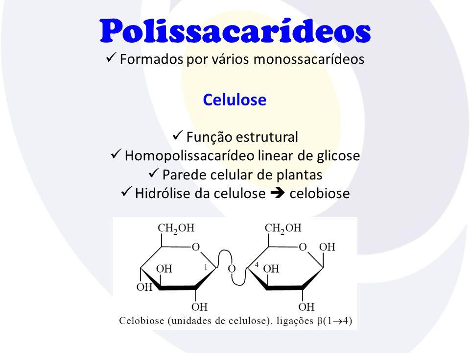 Polissacarídeos  Formados por vários monossacarídeos Celulose  Função estrutural  Homopolissacarídeo linear de glicose  Parede celular de plantas  Hidrólise da celulose  celobiose