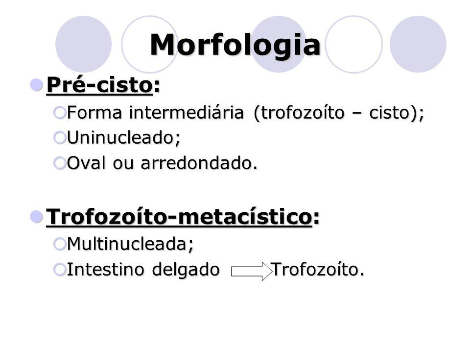 Morfologia  Pré-cisto:  Forma intermediária (trofozoíto – cisto);  Uninucleado;  Oval ou arredondado.  Trofozoíto-metacístico:  Multinucleada; 