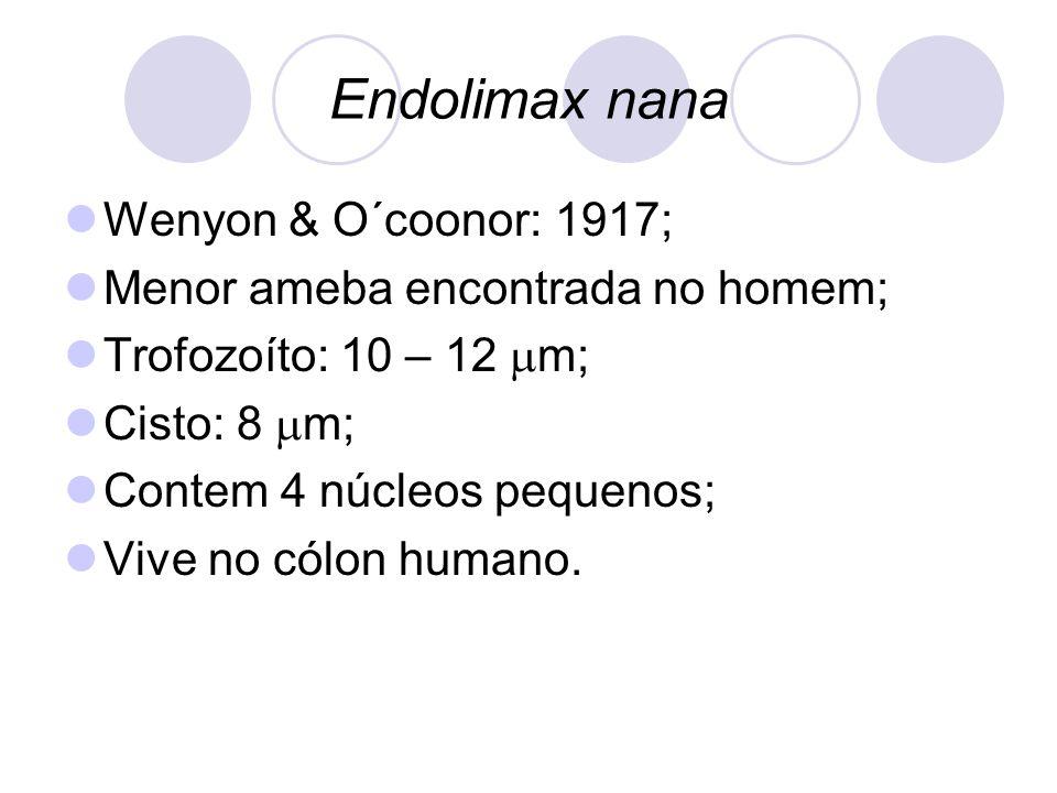 Endolimax nana  Wenyon & O´coonor: 1917;  Menor ameba encontrada no homem;  Trofozoíto: 10 – 12  m;  Cisto: 8  m;  Contem 4 núcleos pequenos; 