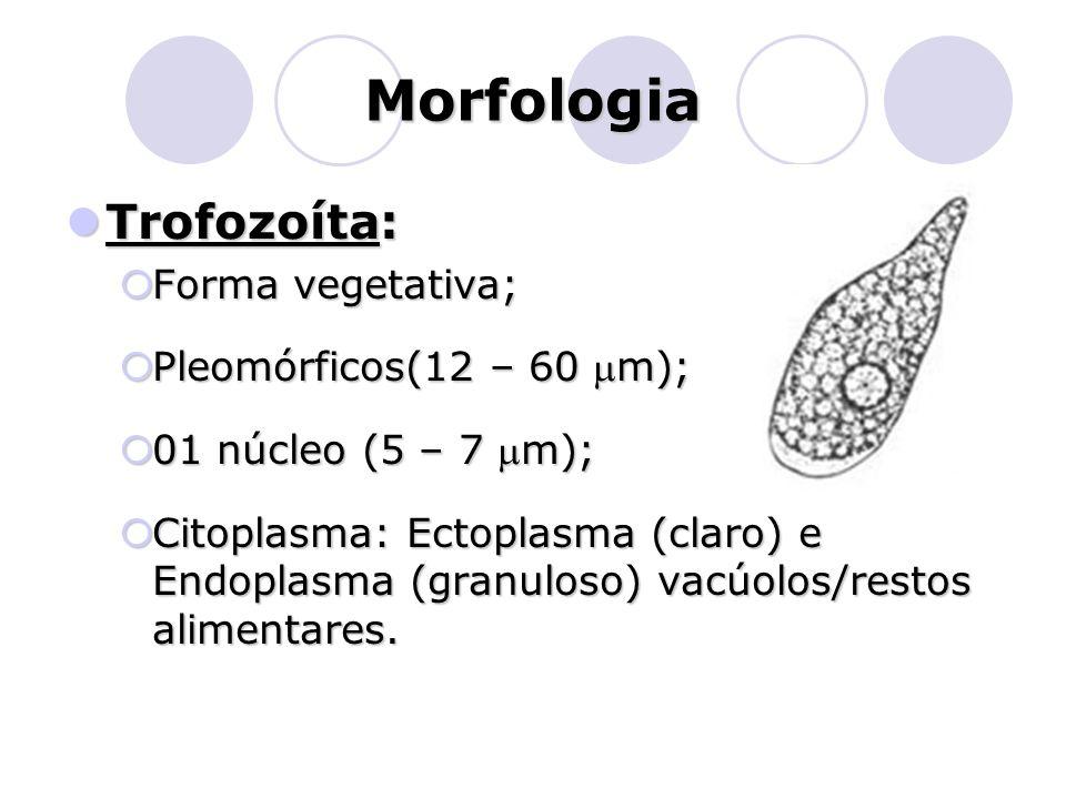 Morfologia  Trofozoíta:  Forma vegetativa;  Pleomórficos(12 – 60 m);  01 núcleo (5 – 7 m);  Citoplasma: Ectoplasma (claro) e Endoplasma (granul