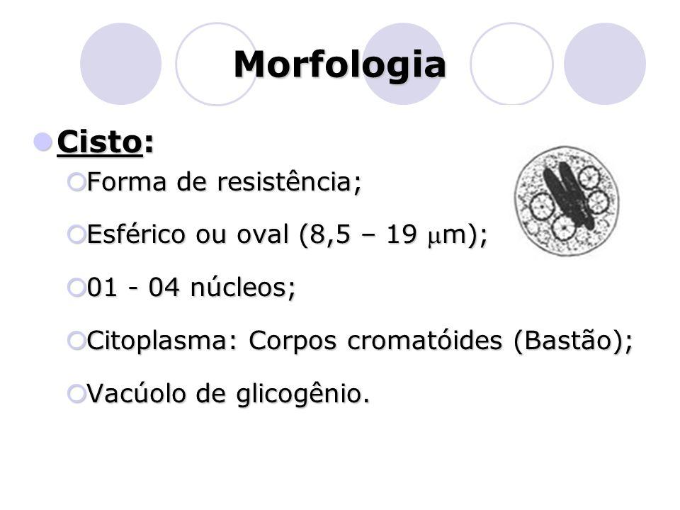 Morfologia  Cisto:  Forma de resistência;  Esférico ou oval (8,5 – 19 m);  01 - 04 núcleos;  Citoplasma: Corpos cromatóides (Bastão);  Vacúolo