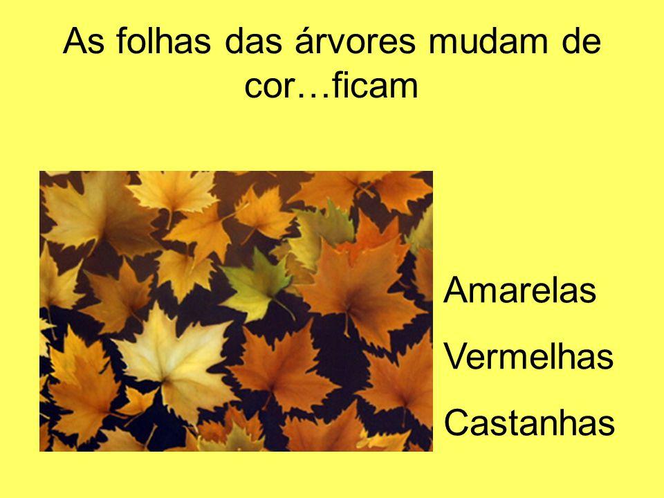 As folhas das árvores mudam de cor…ficam Amarelas Vermelhas Castanhas