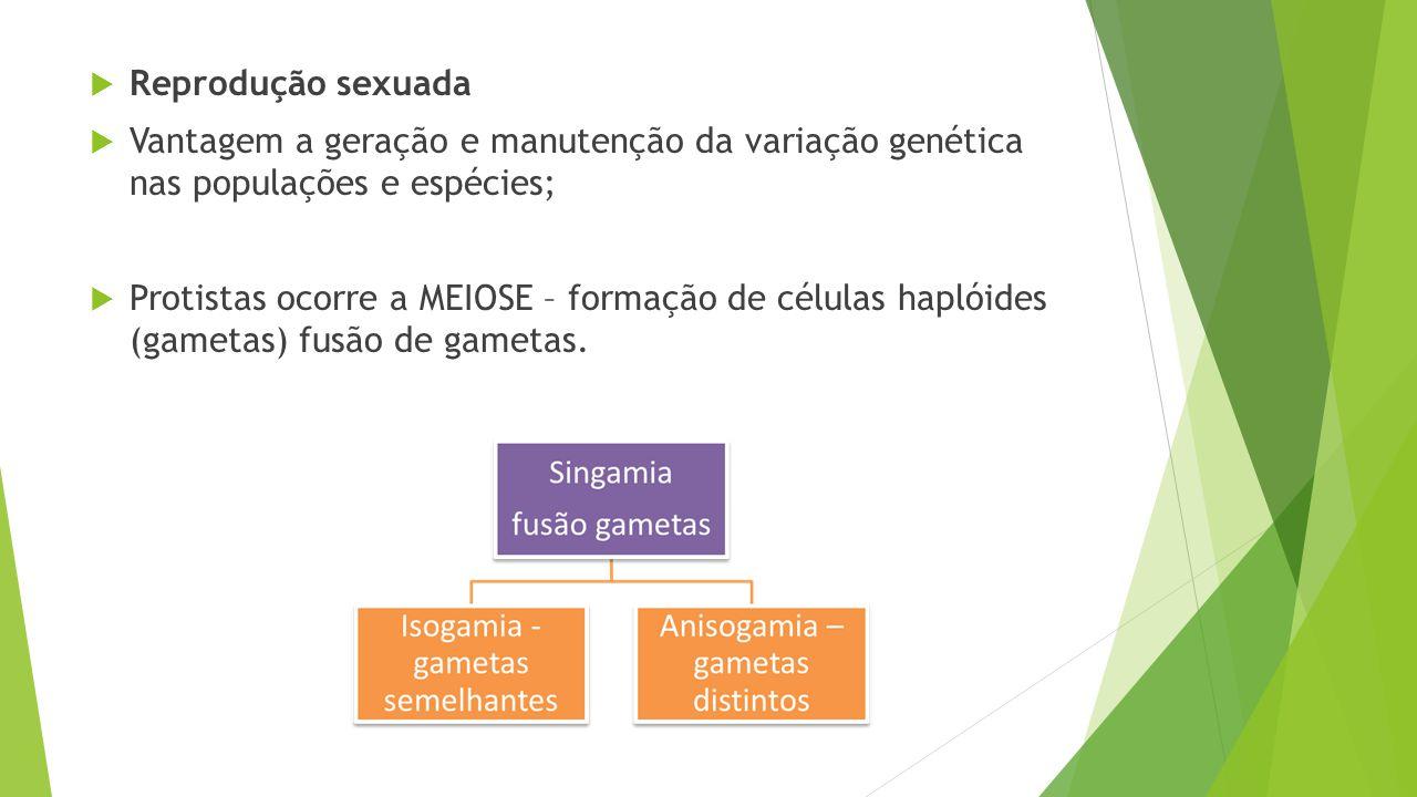  Reprodução sexuada  Vantagem a geração e manutenção da variação genética nas populações e espécies;  Protistas ocorre a MEIOSE – formação de célul