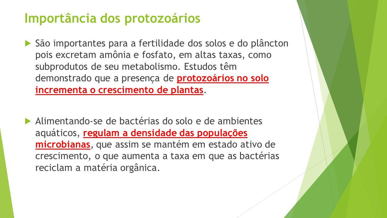 Importância dos protozoários  São importantes para a fertilidade dos solos e do plâncton pois excretam amônia e fosfato, em altas taxas, como subprodutos de seu metabolismo.
