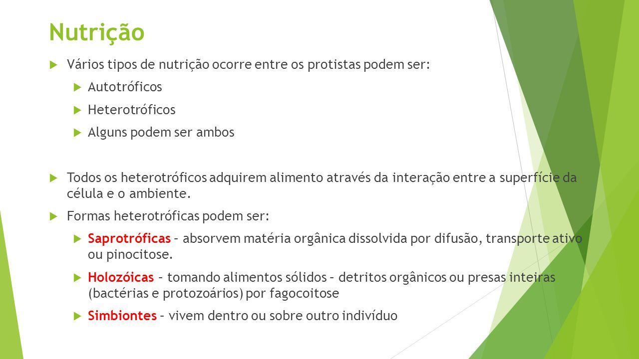 Nutrição  Vários tipos de nutrição ocorre entre os protistas podem ser:  Autotróficos  Heterotróficos  Alguns podem ser ambos  Todos os heterotró