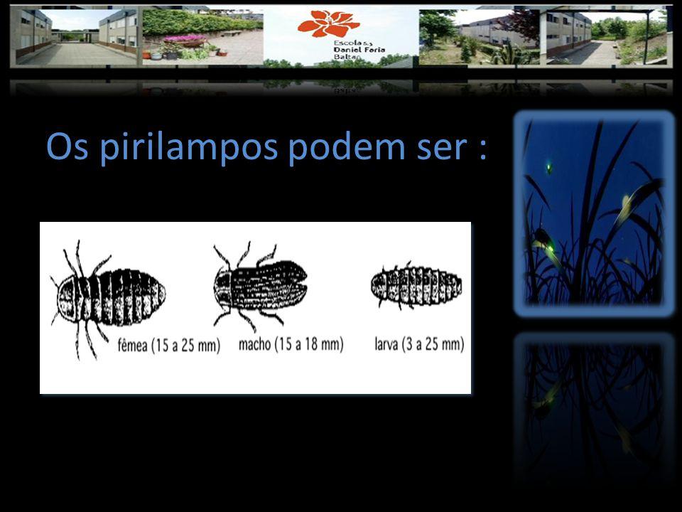 Os pirilampos podem ser :