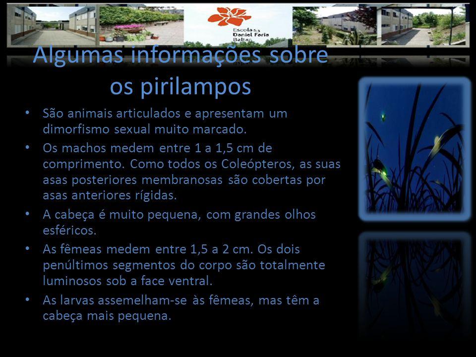 Algumas informações sobre os pirilampos • São animais articulados e apresentam um dimorfismo sexual muito marcado. • Os machos medem entre 1 a 1,5 cm