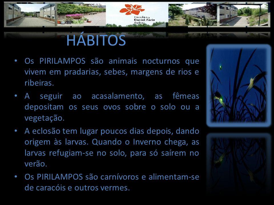 HÁBITOS • Os PIRILAMPOS são animais nocturnos que vivem em pradarias, sebes, margens de rios e ribeiras. • A seguir ao acasalamento, as fêmeas deposit