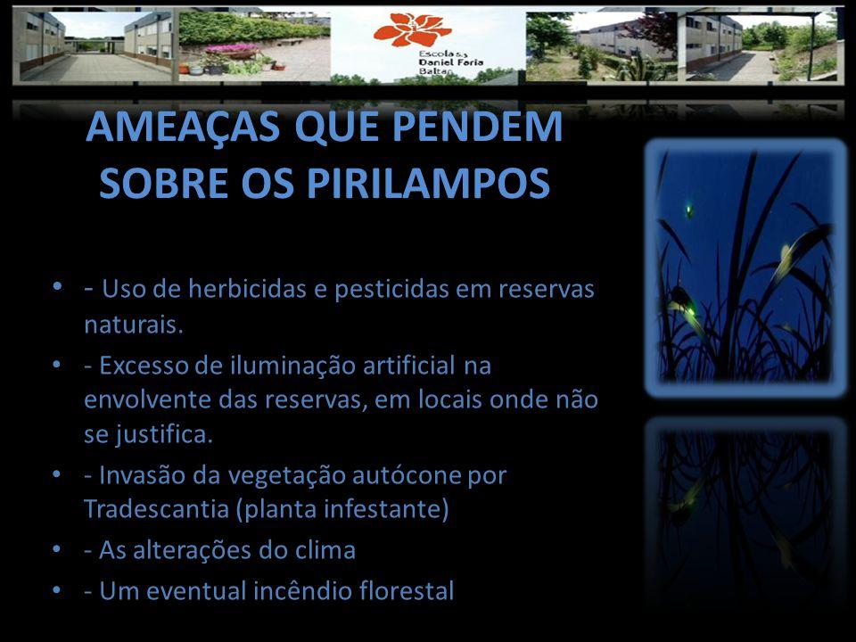 AMEAÇAS QUE PENDEM SOBRE OS PIRILAMPOS • - Uso de herbicidas e pesticidas em reservas naturais. • - Excesso de iluminação artificial na envolvente das