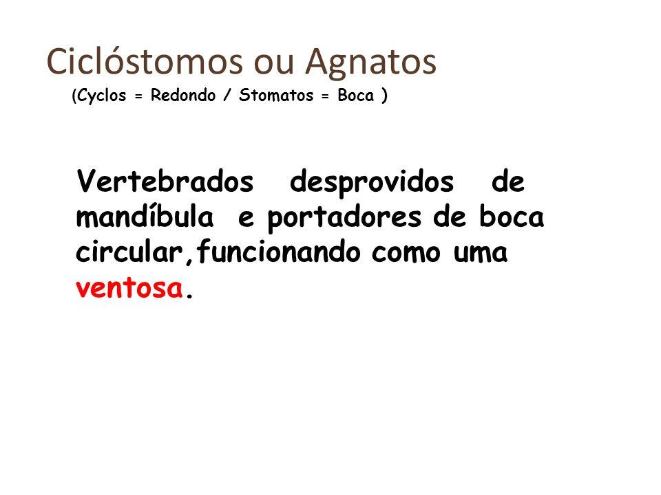 Ciclóstomos ou Agnatos Vertebrados desprovidos de mandíbula e portadores de boca circular,funcionando como uma ventosa.