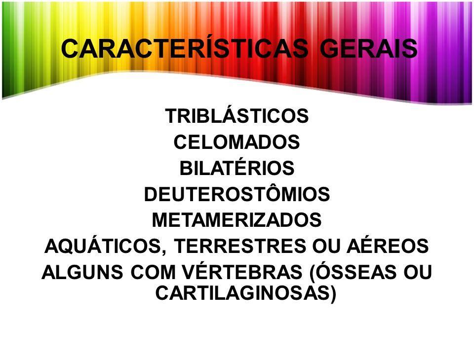 TRIBLÁSTICOS CELOMADOS BILATÉRIOS DEUTEROSTÔMIOS METAMERIZADOS AQUÁTICOS, TERRESTRES OU AÉREOS ALGUNS COM VÉRTEBRAS (ÓSSEAS OU CARTILAGINOSAS) CARACTERÍSTICAS GERAIS