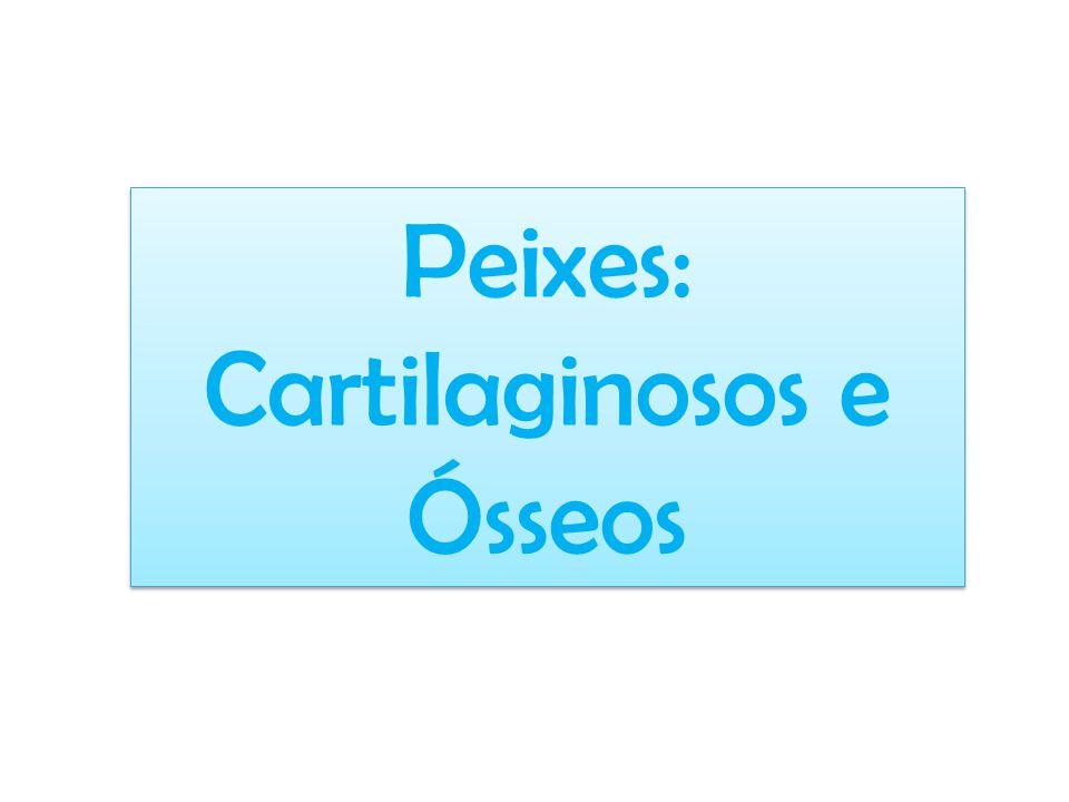 Peixes: Cartilaginosos e Ósseos