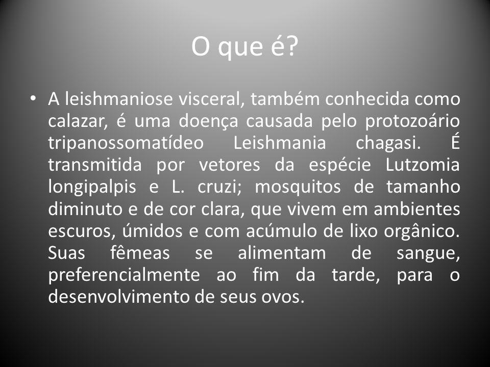 O que é? • A leishmaniose visceral, também conhecida como calazar, é uma doença causada pelo protozoário tripanossomatídeo Leishmania chagasi. É trans