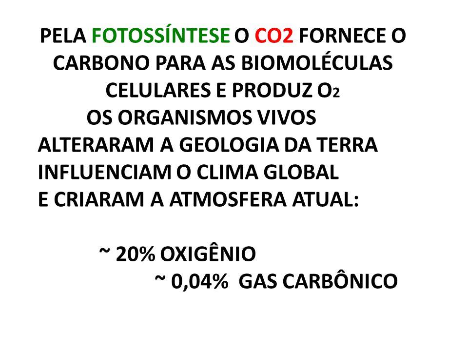 PELA FOTOSSÍNTESE O CO2 FORNECE O CARBONO PARA AS BIOMOLÉCULAS CELULARES E PRODUZ O 2 OS ORGANISMOS VIVOS ALTERARAM A GEOLOGIA DA TERRA INFLUENCIAM O