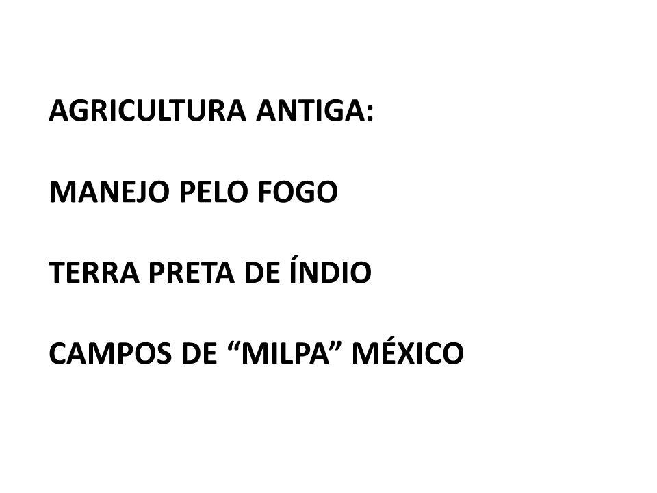 "AGRICULTURA ANTIGA: MANEJO PELO FOGO TERRA PRETA DE ÍNDIO CAMPOS DE ""MILPA"" MÉXICO"