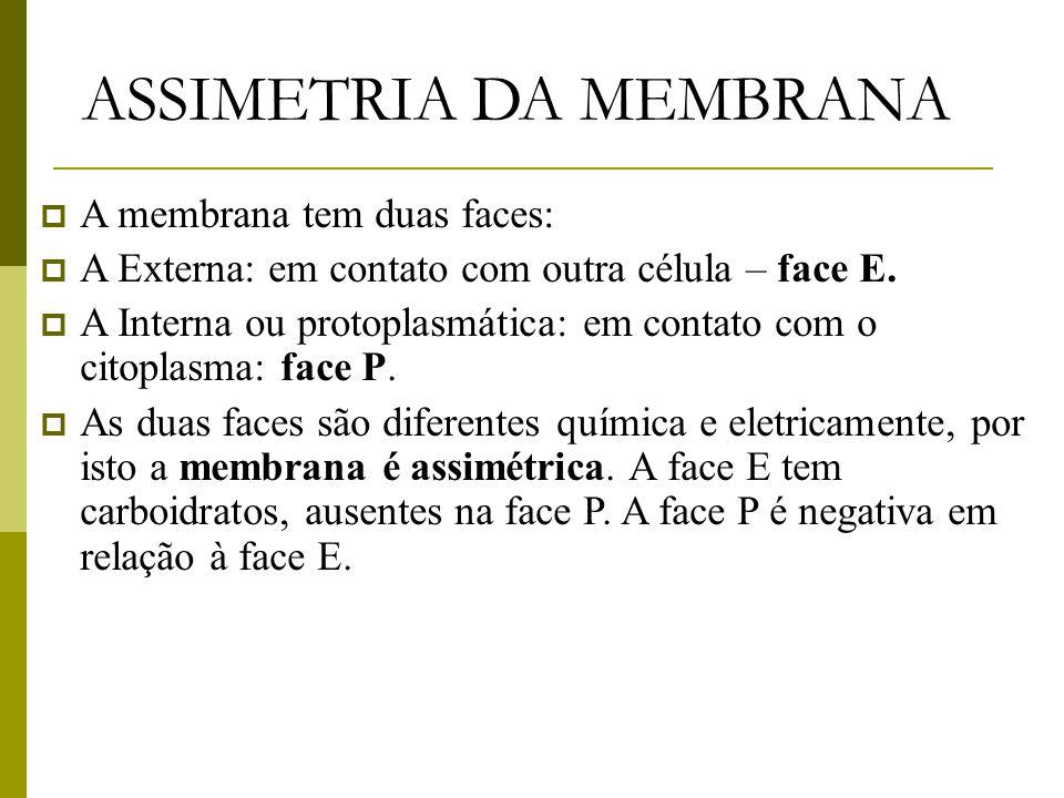 ASSIMETRIA DA MEMBRANA  A membrana tem duas faces:  A Externa: em contato com outra célula – face E.