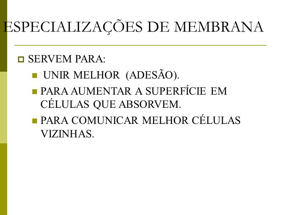 ESPECIALIZAÇÕES DE MEMBRANA  SERVEM PARA:  UNIR MELHOR (ADESÃO).