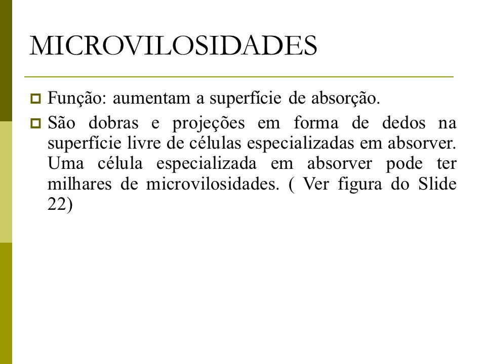 MICROVILOSIDADES  Função: aumentam a superfície de absorção.