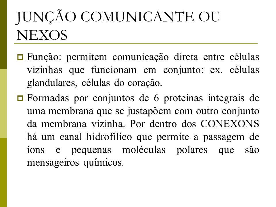 JUNÇÃO COMUNICANTE OU NEXOS  Função: permitem comunicação direta entre células vizinhas que funcionam em conjunto: ex.