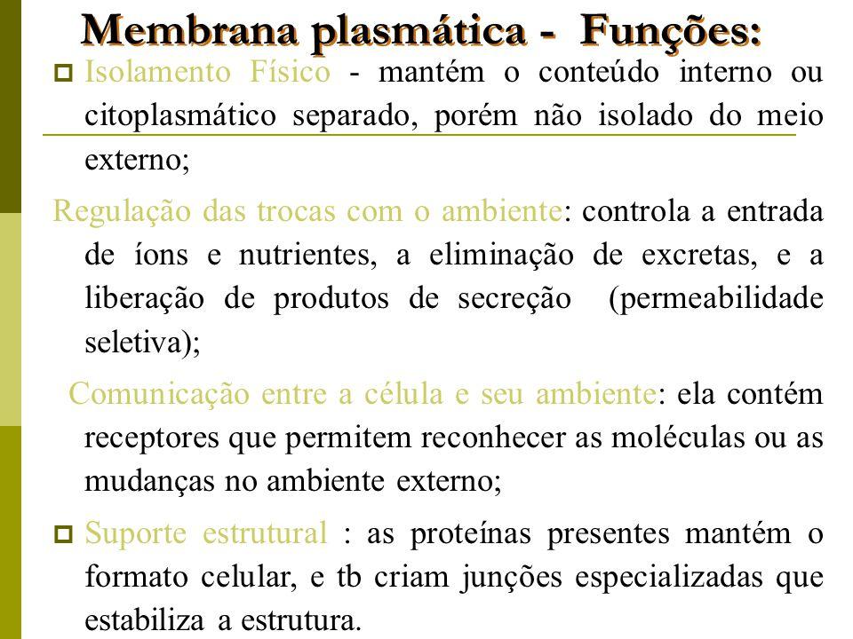 Membrana plasmática - Funções:  Isolamento Físico - mantém o conteúdo interno ou citoplasmático separado, porém não isolado do meio externo; Regulação das trocas com o ambiente: controla a entrada de íons e nutrientes, a eliminação de excretas, e a liberação de produtos de secreção (permeabilidade seletiva); Comunicação entre a célula e seu ambiente: ela contém receptores que permitem reconhecer as moléculas ou as mudanças no ambiente externo;  Suporte estrutural : as proteínas presentes mantém o formato celular, e tb criam junções especializadas que estabiliza a estrutura.