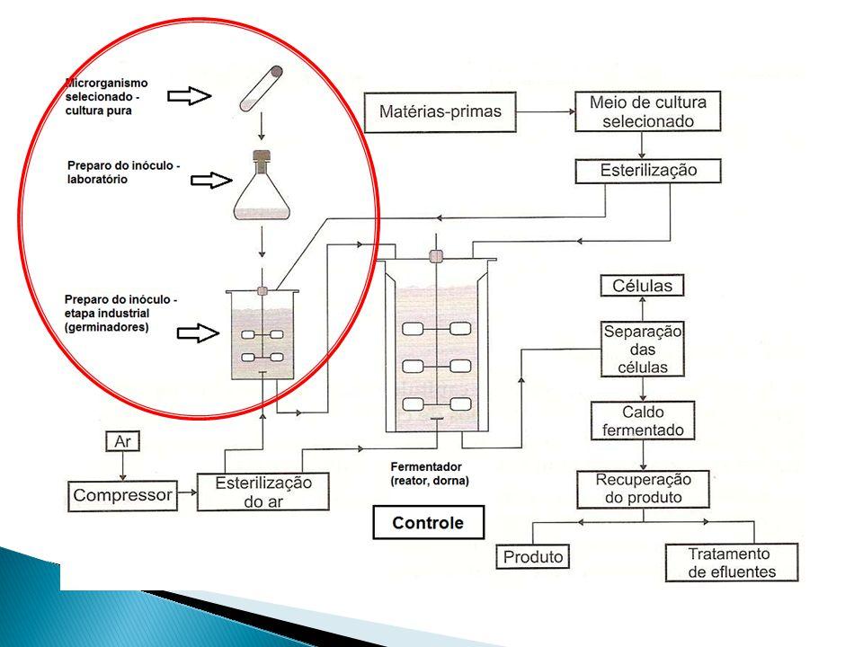 3) Massa de células: Pode ser determinada a partir da estimativa do peso seco ou do peso úmido de uma cultura.