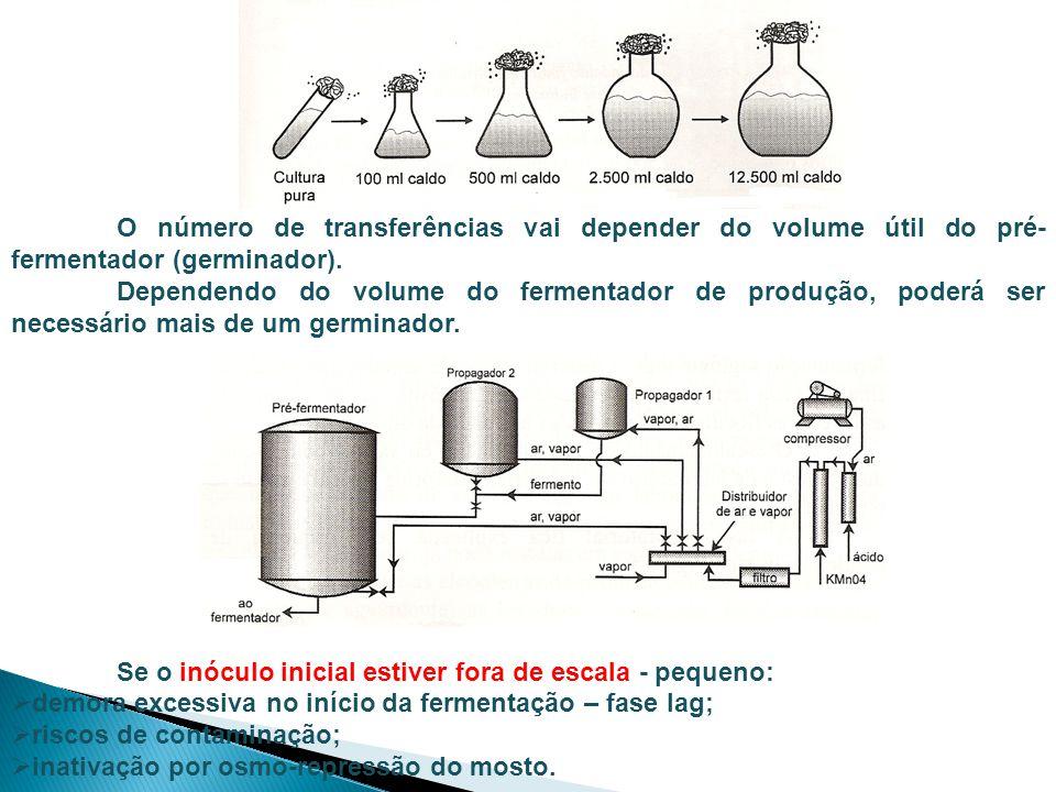 O número de transferências vai depender do volume útil do pré- fermentador (germinador).