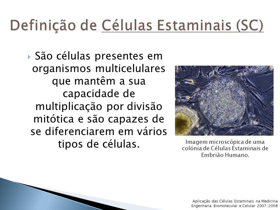  São células presentes em organismos multicelulares que mantêm a sua capacidade de multiplicação por divisão mitótica e são capazes de se diferenciarem em vários tipos de células.