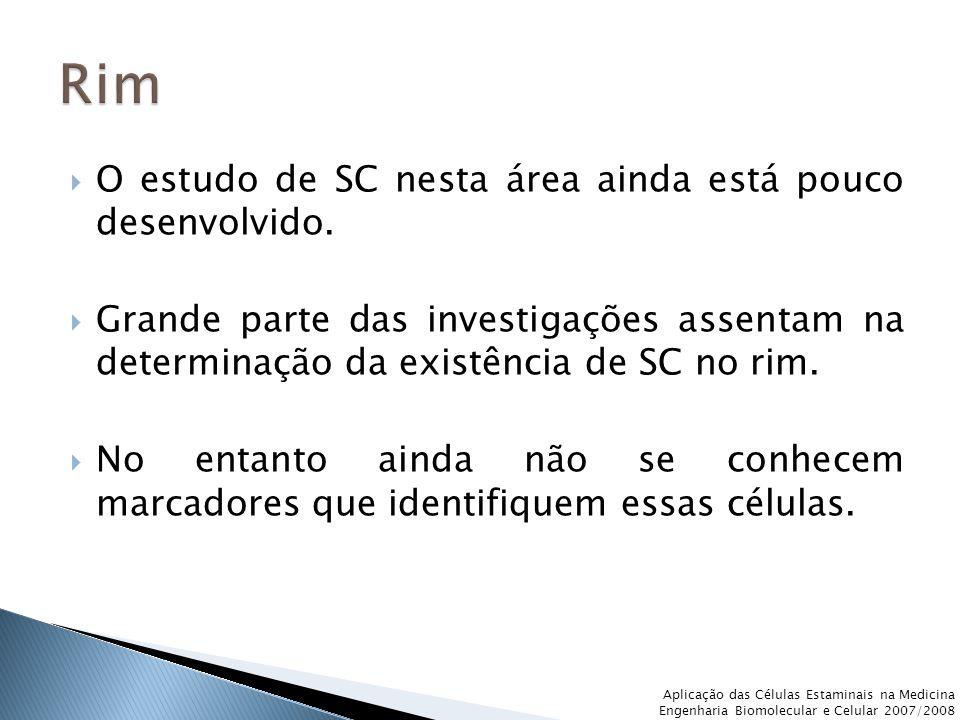  O estudo de SC nesta área ainda está pouco desenvolvido.  Grande parte das investigações assentam na determinação da existência de SC no rim.  No