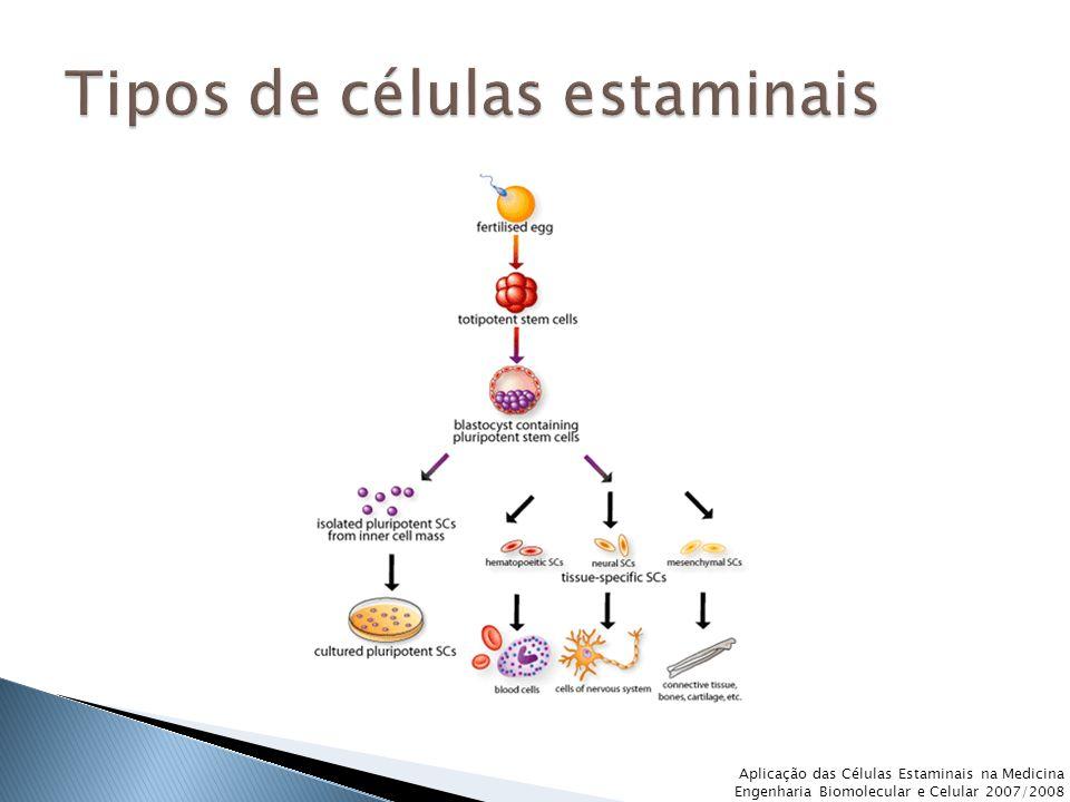 Com a recolha das células estaminais embrionárias dos blastócitos, está-se a destruir o embrião.