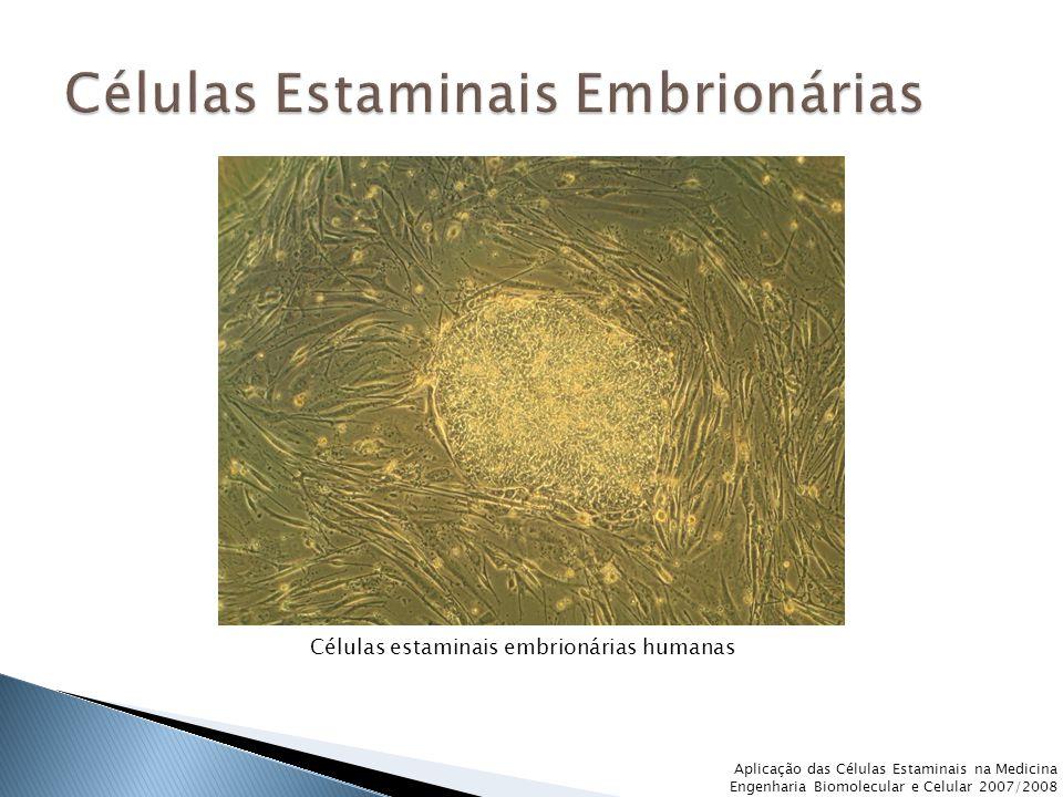 Aplicação das Células Estaminais na Medicina Engenharia Biomolecular e Celular 2007/2008 Células estaminais embrionárias humanas