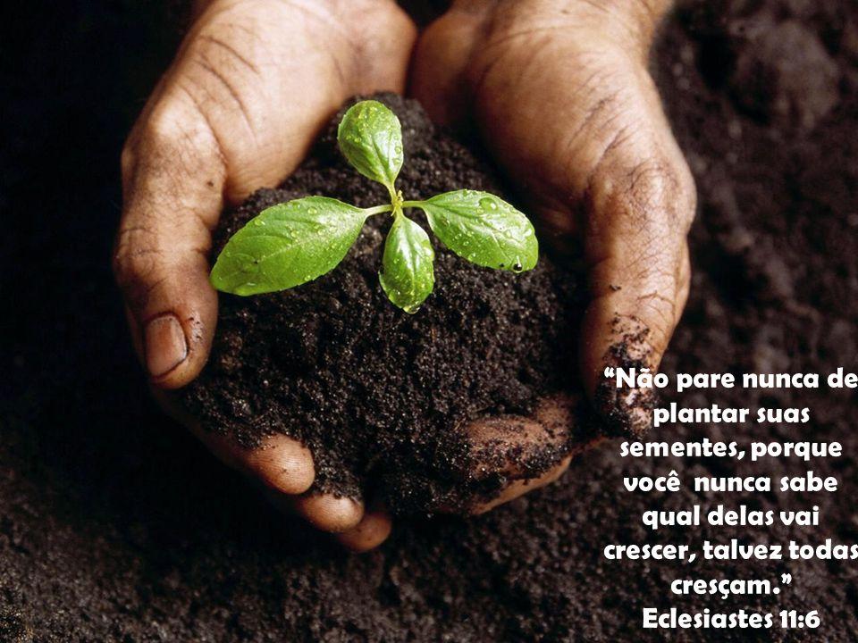 """""""Não pare nunca de plantar suas sementes, porque você nunca sabe qual delas vai crescer, talvez todas cresçam."""" Eclesiastes 11:6"""