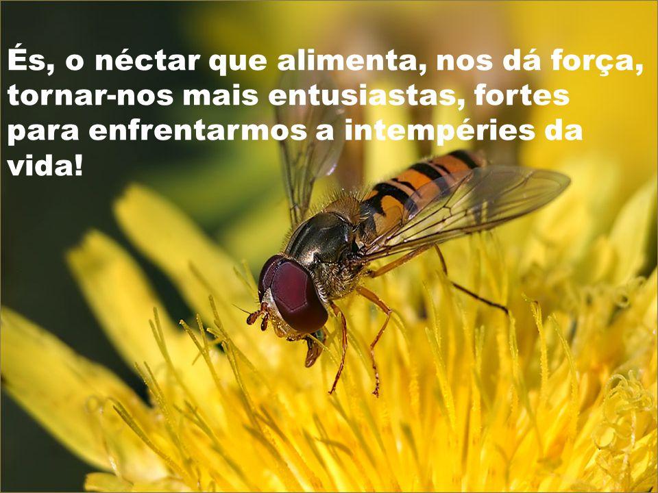 És, o néctar que alimenta, nos dá força, tornar-nos mais entusiastas, fortes para enfrentarmos a intempéries da vida!