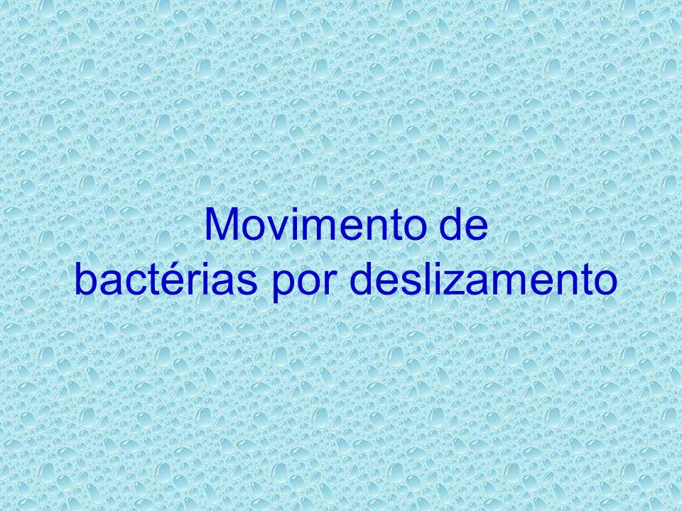 Movimento de bactérias por deslizamento