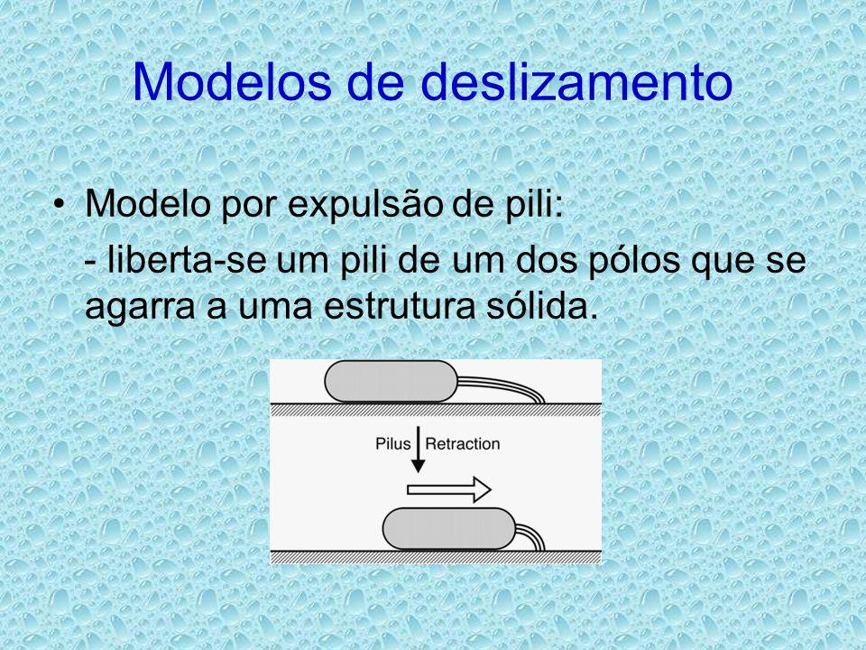 Modelos de deslizamento •Modelo por expulsão de pili: - liberta-se um pili de um dos pólos que se agarra a uma estrutura sólida.