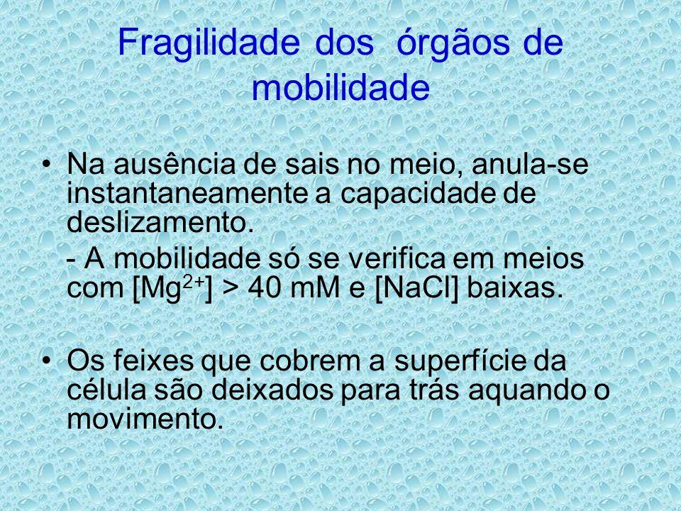 Fragilidade dos órgãos de mobilidade •Na ausência de sais no meio, anula-se instantaneamente a capacidade de deslizamento. - A mobilidade só se verifi