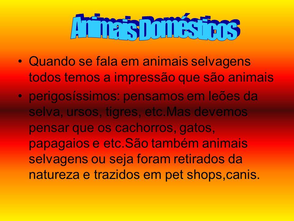 •Q•Quando se fala em animais selvagens todos temos a impressão que são animais •p•perigosíssimos: pensamos em leões da selva, ursos, tigres, etc.Mas devemos pensar que os cachorros, gatos, papagaios e etc.São também animais selvagens ou seja foram retirados da natureza e trazidos em pet shops,canis.