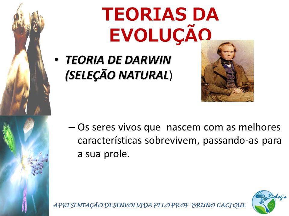 TEORIAS DA EVOLUÇÃO • TEORIA DE DARWIN (SELEÇÃO NATURAL • TEORIA DE DARWIN (SELEÇÃO NATURAL) – Os seres vivos que nascem com as melhores características sobrevivem, passando-as para a sua prole.