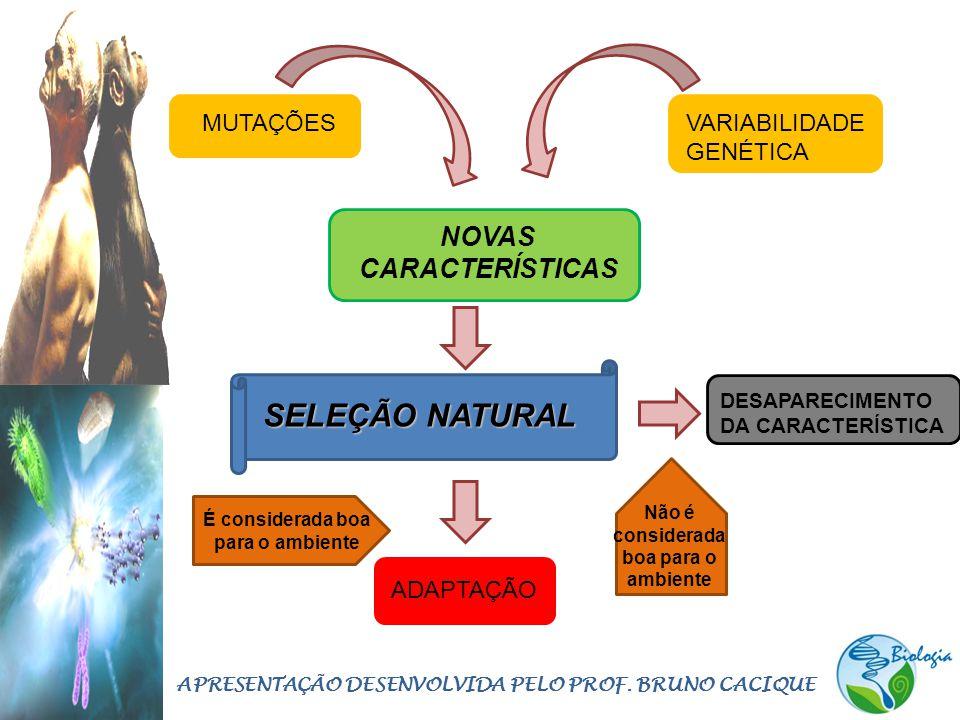 NOVAS CARACTERÍSTICAS MUTAÇÕESVARIABILIDADE GENÉTICA SELEÇÃO NATURAL ADAPTAÇÃO DESAPARECIMENTO DA CARACTERÍSTICA Não é considerada boa para o ambiente