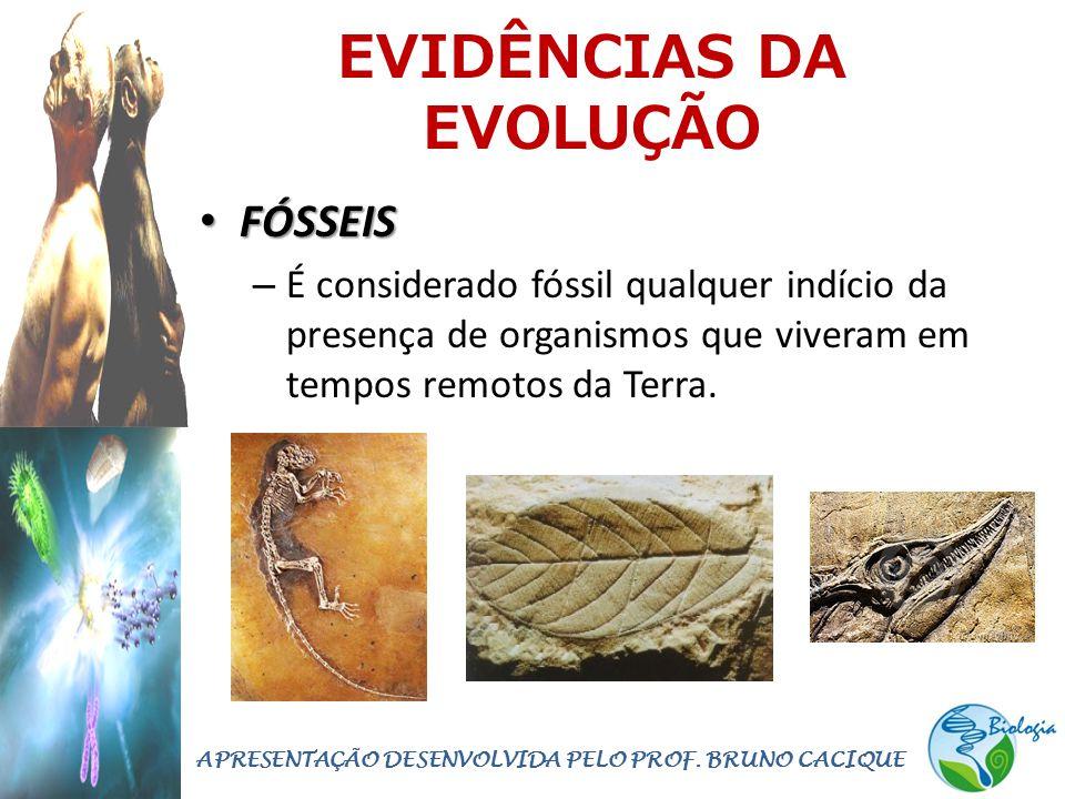 EVIDÊNCIAS DA EVOLUÇÃO • FÓSSEIS – É considerado fóssil qualquer indício da presença de organismos que viveram em tempos remotos da Terra.