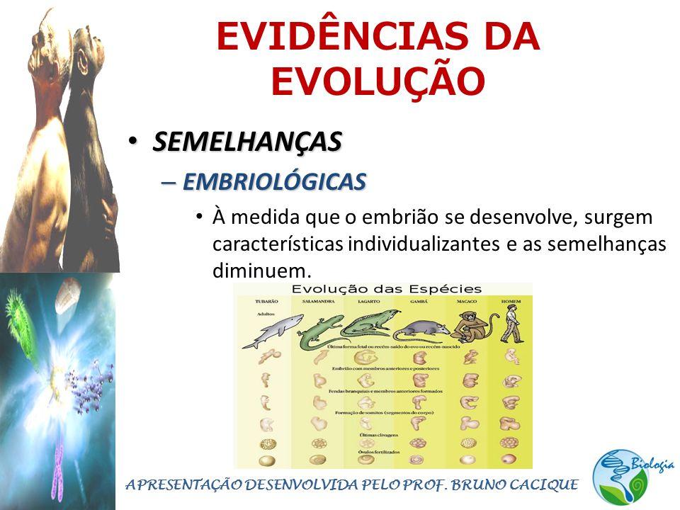 EVIDÊNCIAS DA EVOLUÇÃO • SEMELHANÇAS – EMBRIOLÓGICAS • À medida que o embrião se desenvolve, surgem características individualizantes e as semelhanças diminuem.