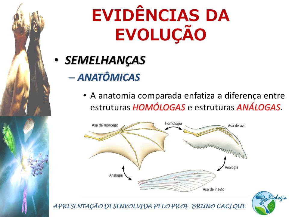 EVIDÊNCIAS DA EVOLUÇÃO • SEMELHANÇAS – ANATÔMICAS HOMÓLOGASANÁLOGAS • A anatomia comparada enfatiza a diferença entre estruturas HOMÓLOGAS e estruturas ANÁLOGAS.